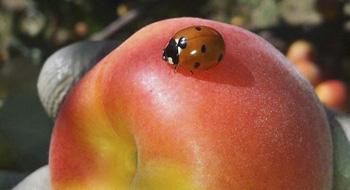 Tany-Nature-fruta-servicio-producir-envasar-distriuir-productores-Extremadura-Zurbaran