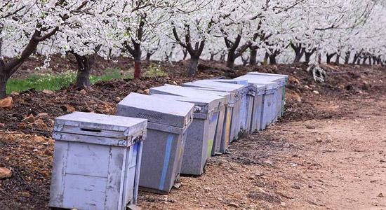 Tany-Nature-Hitos-de-nuestra-historia-productores-de-fruta-Extremadura-2015