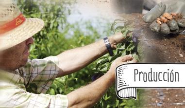 Tany-Nature-Produccion-Envasado-y-Logistica-Calidad-e-Innovacion-productores-Extremadura-TantNature