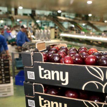Tanynature envasado agilidad flexibilidad eficiencia y servicio productos fruta de hueso Extreadura Zurbaran