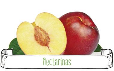 Tanynature-productores-fruta-de-hueso-nectarinas-Extremadura-Zurbaran