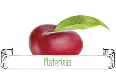 Tanynature-productores-fruta-de-hueso-platerinas-Extremadura-Zurbaran